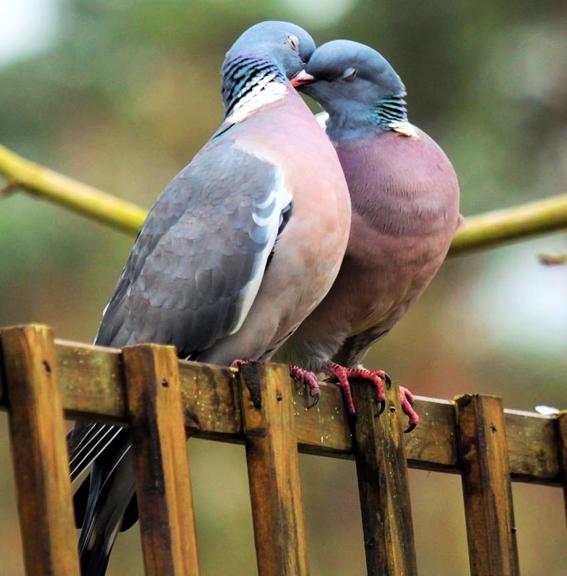 عاشقانه پرندگان
