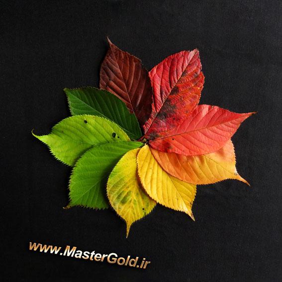 برگهای رنگین پاییزی